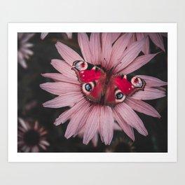 Butterfy Art Print
