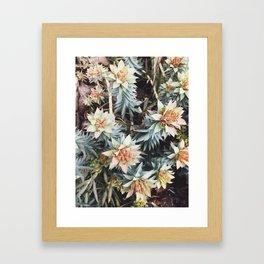 orange succulent Framed Art Print