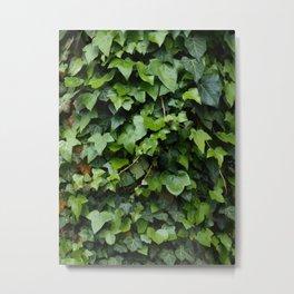 Ivy Art Print | Nature Art Print | Odense Denmark | Green Nature Print Metal Print