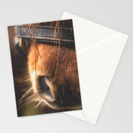 Soft Horse Nose Stationery Cards