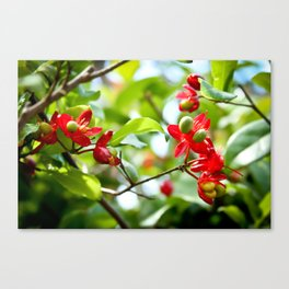 Rosy Red Flowers Canvas Print