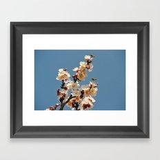 Spring 2013 05 Framed Art Print