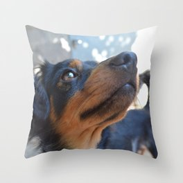 Chalie or Charly is one beatiful dog Throw Pillow