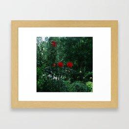 Rose Garden (Companionship) Framed Art Print
