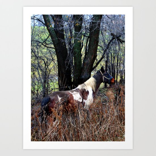 Horse with Blue Bridle Art Print