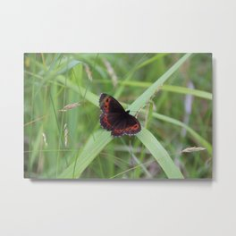 Arran Brown butterfly Metal Print