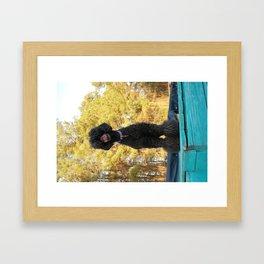 Black Poodle Framed Art Print