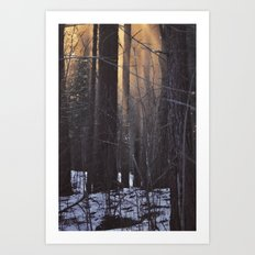 In The Woods There Was A Light Art Print