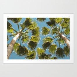 Palm tree Palmera Art Print