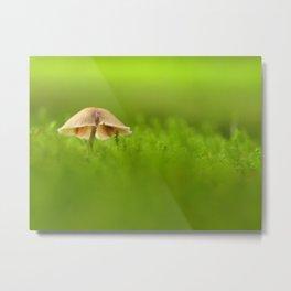 Mushroom In The Evening Moss Metal Print