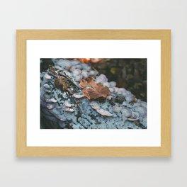 mystic woods Framed Art Print