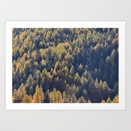 Beautiful autumn forest in mountain Art Print