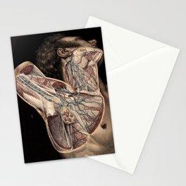 Vintage Human Anatomy Illustration Stationery Cards