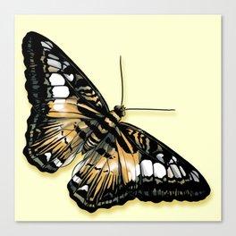 Papillon jaune et noir Canvas Print
