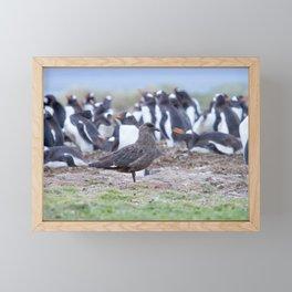 Great Skua in front of penguin colony Framed Mini Art Print