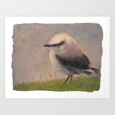 Nuthatch Art Print