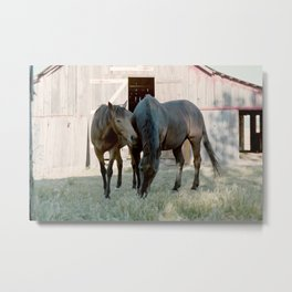 In For The Long Haul (Horses in Northern California) Metal Print