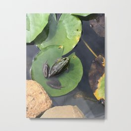 Frog, Chillin on the Pad Metal Print