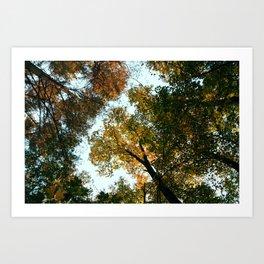 Fall Treetops Art Print