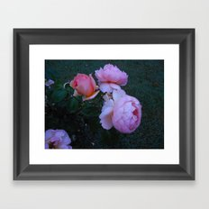 Roses in the Mist Framed Art Print