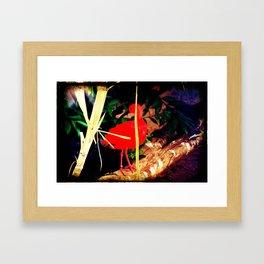 Scarlet Ibis Framed Art Print