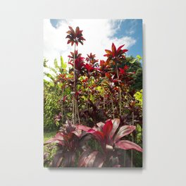 Red Ti Tropical Gardens Hawaiian ti plant Wailua Maui Hawaii Metal Print