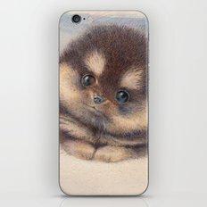 Pomeranian iPhone & iPod Skin