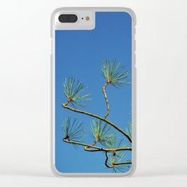 Jeffrey's pine tree branches Clear iPhone Case