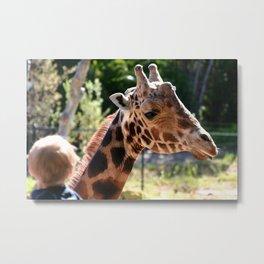 Baringo Giraffe with Child Metal Print