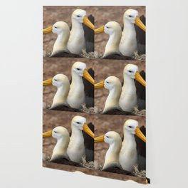 Waved Albatross couple in Galapagos Wallpaper