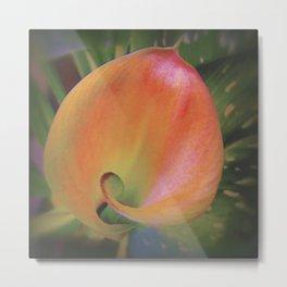 Fire Glow Calla Lily Metal Print