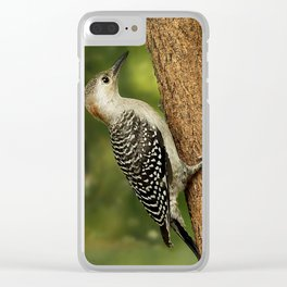 Juvenile Red Bellied Woodpecker Clear iPhone Case