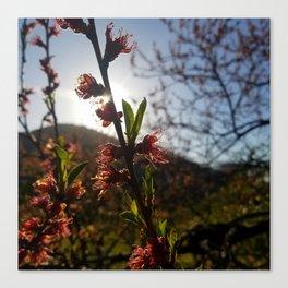 Afternoon bloom Canvas Print