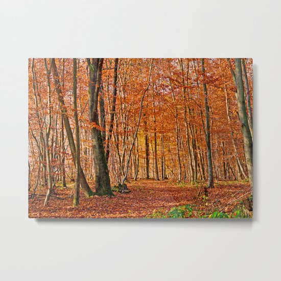 Autumn in the forest Metal Print
