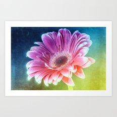 The Gerbera Rainbow Art Print