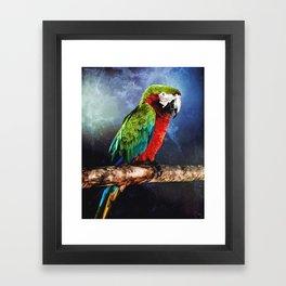 Mister Macaw Framed Art Print
