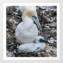 Gannet and Chick by tarrby