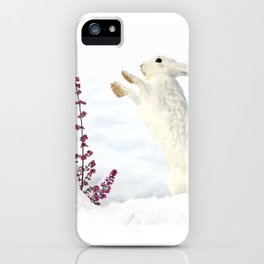 White rabbits dancing around red erica in snow mountain. iPhone Case