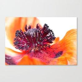 Eruption of colors... (II) Canvas Print