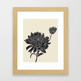 Black Chrysanthemum Framed Art Print