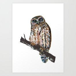 Mrs Ruru, New Zealand Morepork Owl Art Print