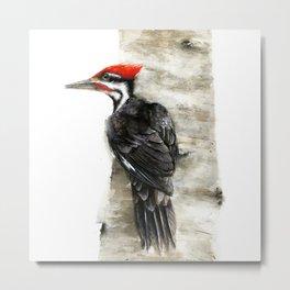 Pileated Woodpecker Watercolor Metal Print