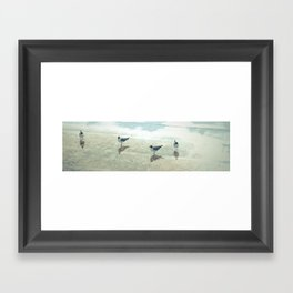 Gulls in a Puddle Framed Art Print