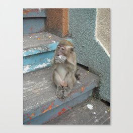 MONKEY1 Canvas Print