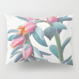Succulent Cluster Pillow Sham