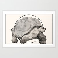 tortoise Art Prints featuring Tortoise by Twentyfive