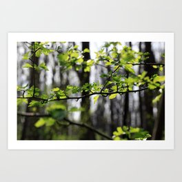 Waldlichter Art Print