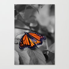 Monarch BW Canvas Print