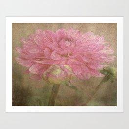 Soft Graceful Pink Painted Dahlia Art Print