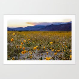 Anza Borrego Sunflowers Art Print